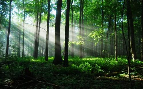 Giữ rừng phòng hộ
