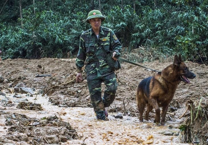 Thừa Thiên Huế đề nghị đưa chó nghiệp vụ vào Rào Trăng 3 tham gia tìm kiếm người mất tích