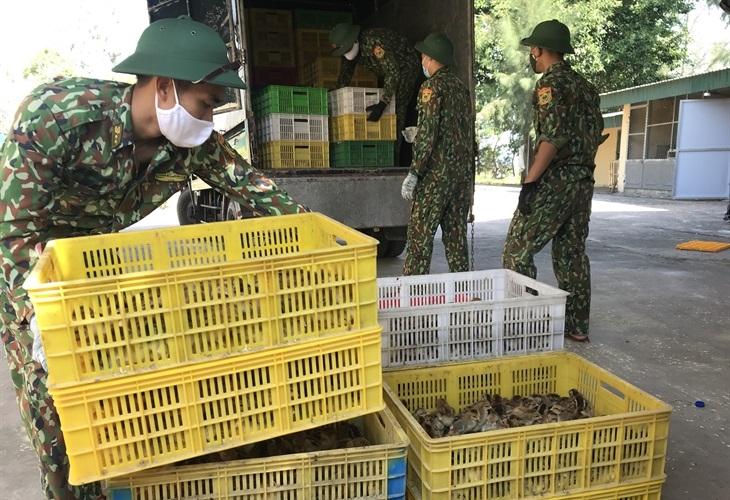 Bắt giữ phương tiện vận chuyển 12 nghìn con gà giống không rõ nguồn gốc
