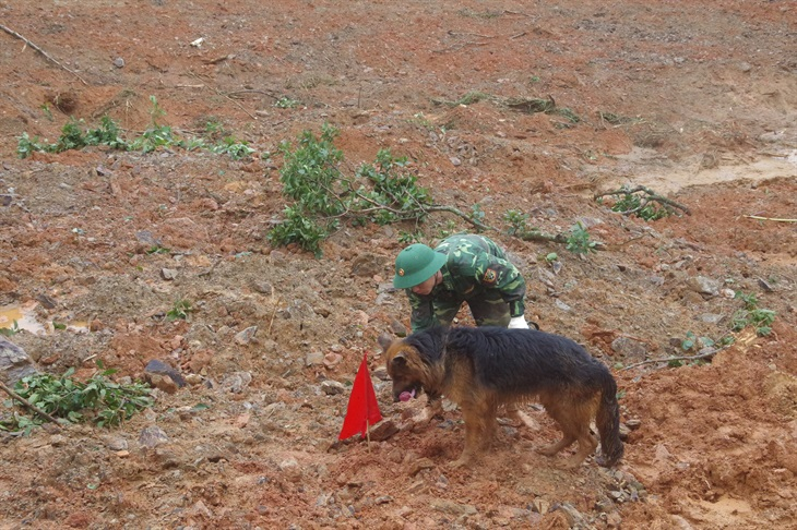 Chó nghiệp vụ của BĐBP sẽ tham gia tìm kiếm người mất tích tại Trà Leng