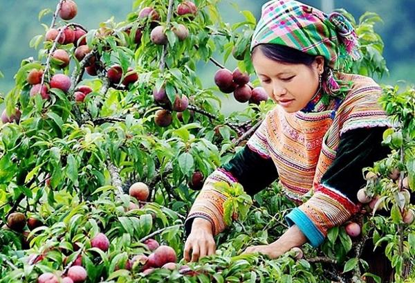 Ngành nghề nông thôn giải quyết việc làm cho 2,3 triệu người