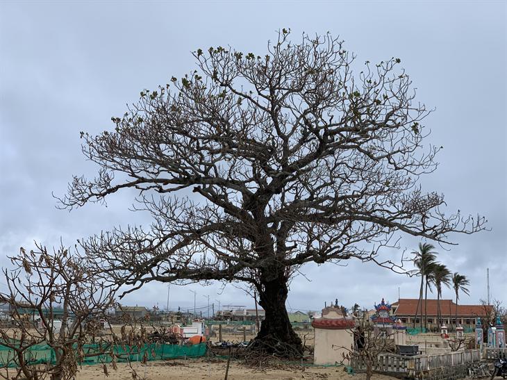 Xác xơ thiên đường du lịch đảo Lý Sơn