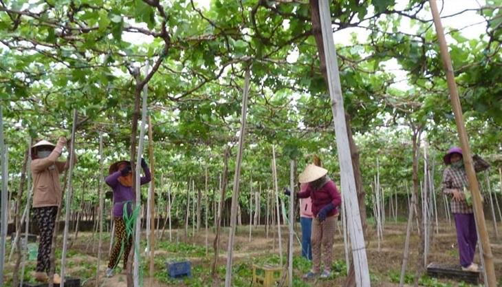 Phát triển nông nghiệpthích ứng với khô hạn
