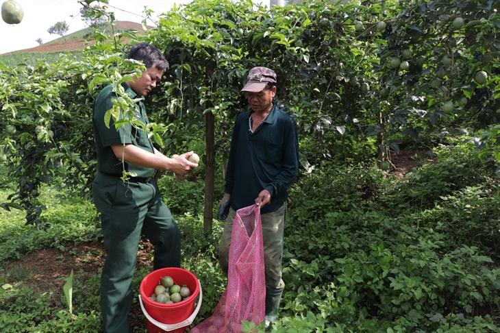 Giúp dân thoát nghèotừ cây chanh leo