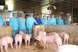 Kế hoạch quốc gia phòng, chống bệnh Dịch tả lợn Châu Phi