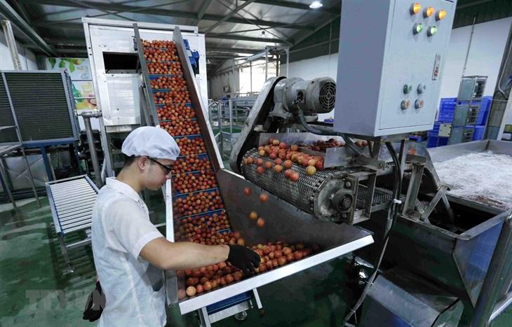 Xuất khẩu rau quả sang thị trường khó tính tăng trưởng tốt