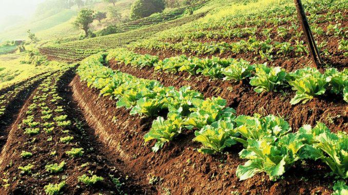 Áp lực phát triển nông nghiệp bền vững