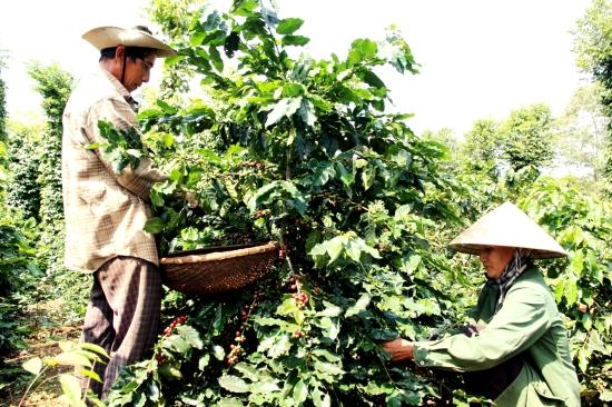 Thị trường Châu Âu là tín chỉ khẳng định chất lượng nông sản Việt Nam