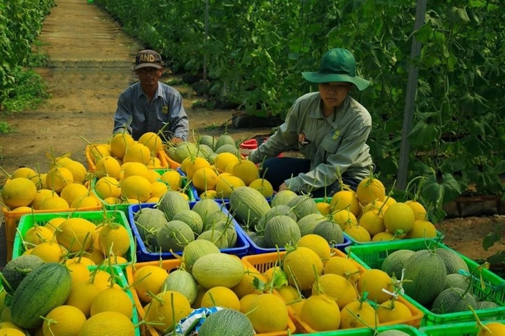 Nông nghiệp vẫn là trụ đỡ cho nền kinh tế trong đại dịch Covid-19