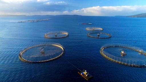 Chiến lược nuôi biển