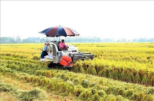 Gạo Việt chinh phục thế giới