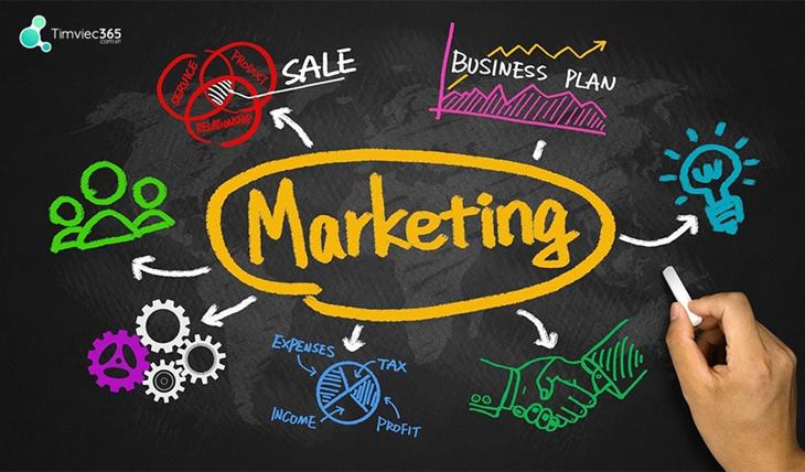 Tìm hiểu mô tả công việc nhân viên marketing cùng Timviec365.com.vn