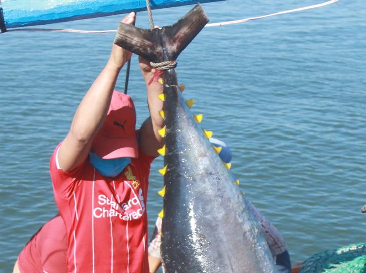 Báo động đỏ nghề khai thác thủy sản (bài 5)