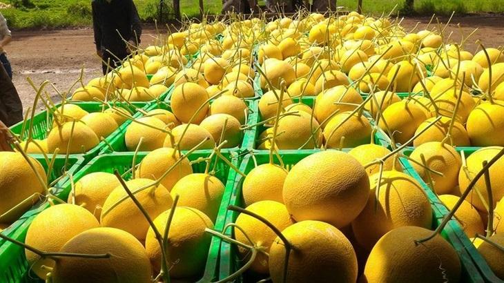 Xuất khẩu nông sản sẽ gặp khó khăn trong những tháng cuối năm