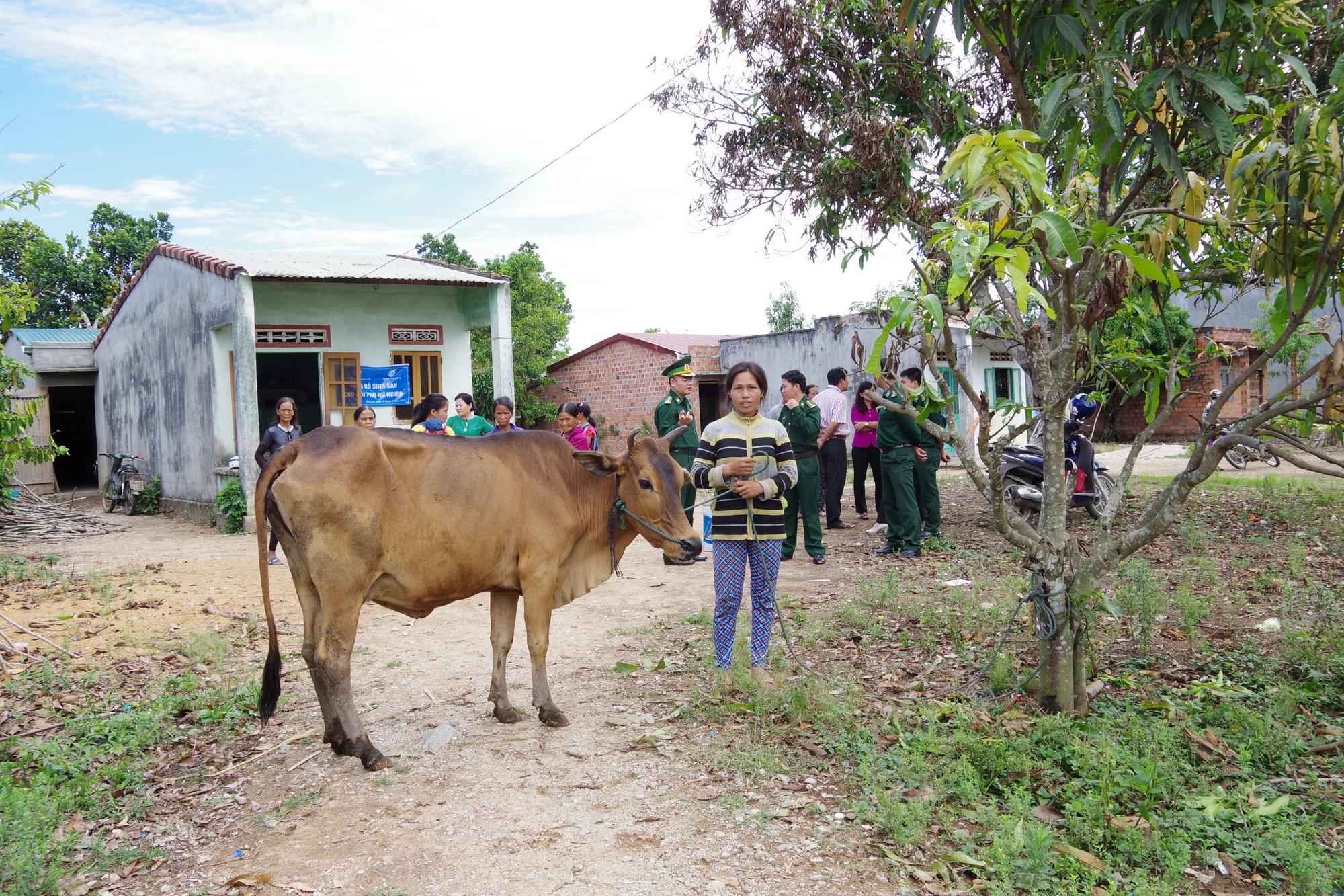 BĐBP Kon Tum tặng bò giống cho hộ nghèo
