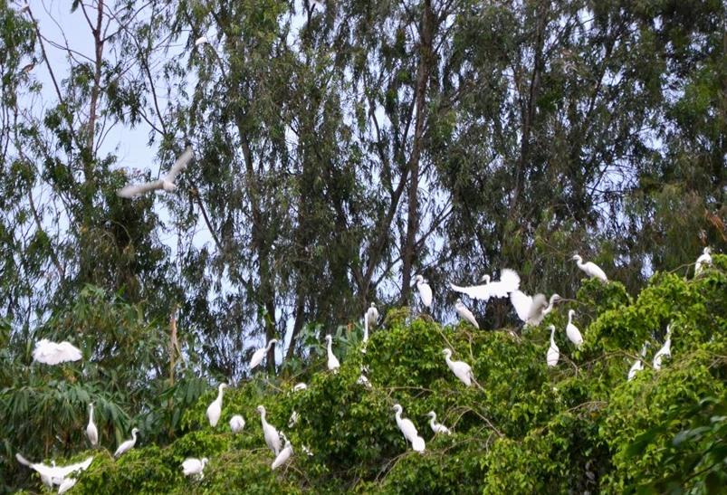 Người cựu binh dành tâm sức làm nơi trú ngụ cho chim